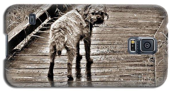Pet Portrait - Puck Galaxy S5 Case by Laura  Wong-Rose