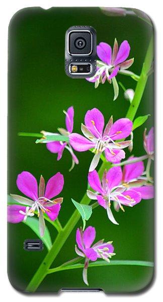 Petites Fleurs Violettes Galaxy S5 Case