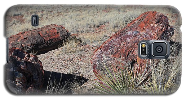 Galaxy S5 Case featuring the photograph Petrified Afternoon by Gary Kaylor
