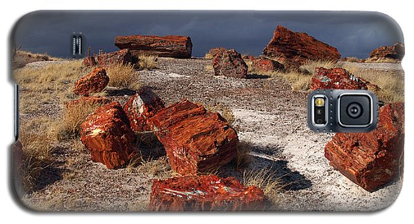 Galaxy S5 Case featuring the photograph Petrified Forest National Park by James Peterson