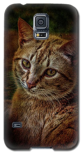 Pets Fat Cat Portrait 2 Galaxy S5 Case