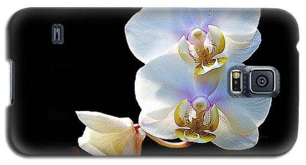 Phalaenopsis Culican #1 Nobby's Amy Shin Hua Galaxy S5 Case
