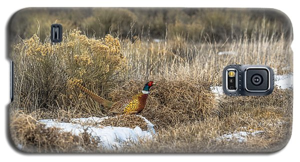 Galaxy S5 Case featuring the photograph Pheasant Glory by Yeates Photography
