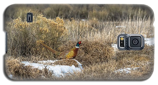 Pheasant Glory Galaxy S5 Case by Yeates Photography