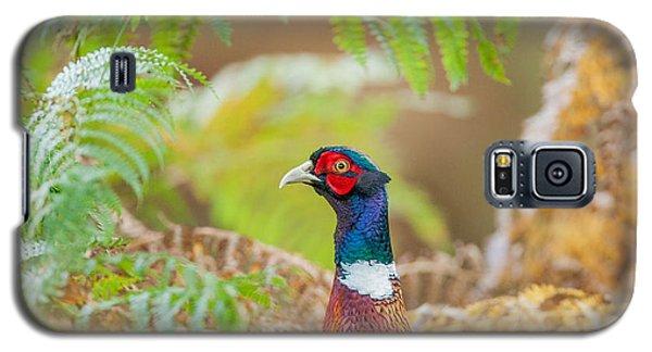 Pheasant Galaxy S5 Case - Pheasant Portrait by Paul Neville