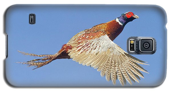 Pheasant Wings Galaxy S5 Case