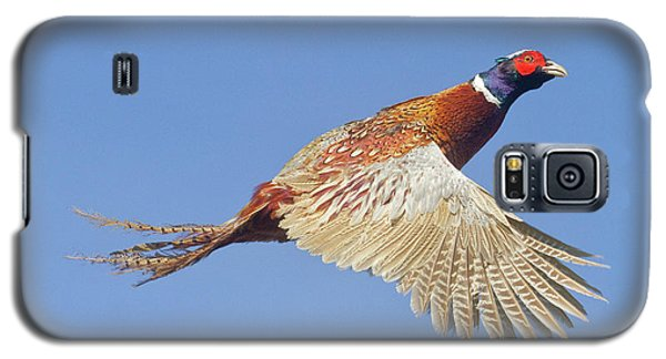 Pheasant Wings Galaxy S5 Case