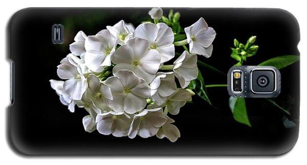 Phlox Flowers Galaxy S5 Case
