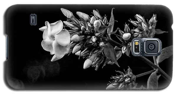 Phlox In Black And White Galaxy S5 Case