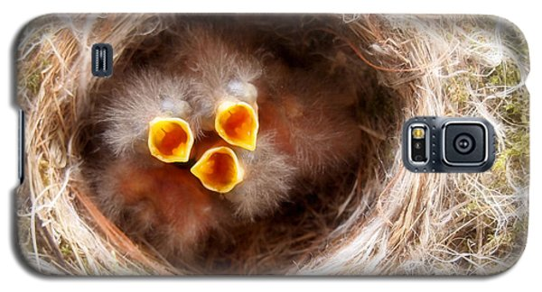 Phoebe Babies Galaxy S5 Case by Angie Rea