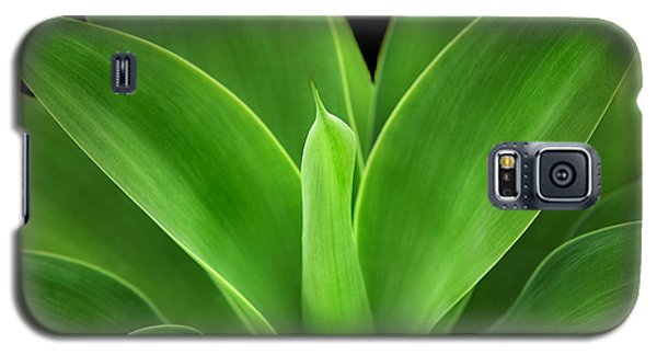 Phoenix Rising Galaxy S5 Case by Marion Cullen