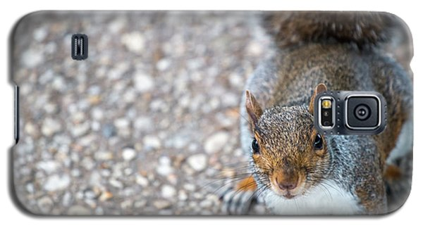 Photo Of Squirel Looking Up From The Ground Galaxy S5 Case