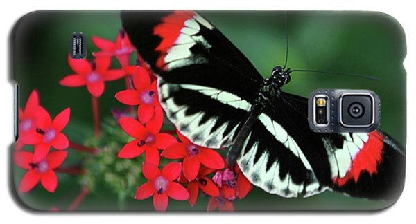 Piano Key Butterfly Galaxy S5 Case