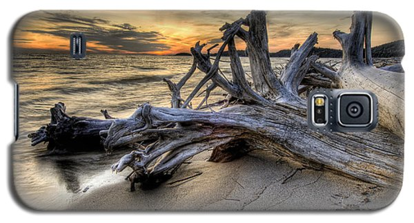 Pic Driftwood Galaxy S5 Case