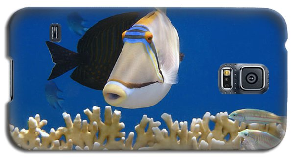 Picasso Fish And Klunzingerwrasse Galaxy S5 Case