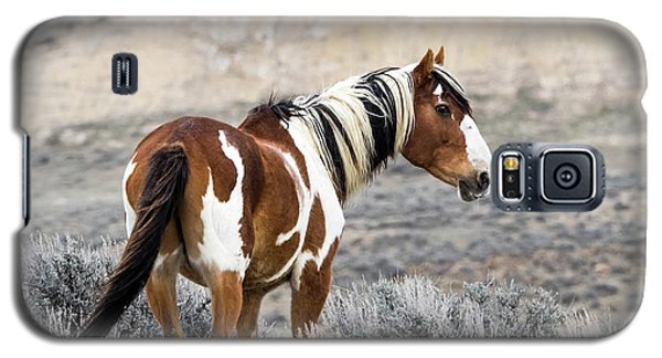 Picasso - Wild Mustang Stallion Of Sand Wash Basin Galaxy S5 Case