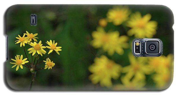 Galaxy S5 Case featuring the photograph Pick Me Daisies by LeeAnn McLaneGoetz McLaneGoetzStudioLLCcom