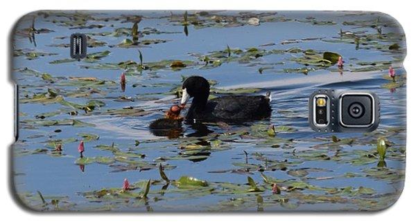 Pied Billed Grebe Lake John Swa Co Galaxy S5 Case