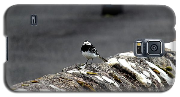 Pied Wagtail Galaxy S5 Case