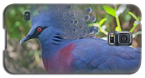 Pigeon Elegante Galaxy S5 Case by Judy Kay