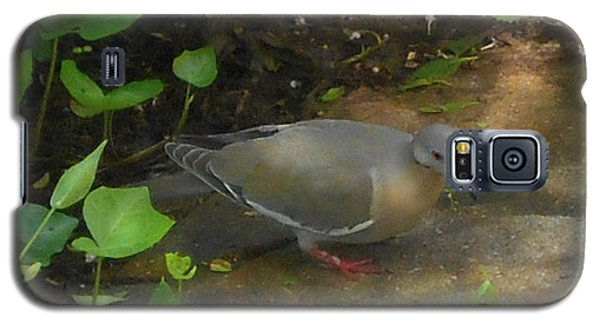 Galaxy S5 Case featuring the photograph Pigeon by Felipe Adan Lerma