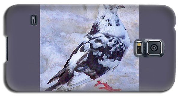 Galaxy S5 Case featuring the photograph Pigeon On Ice  1 by John Selmer Sr