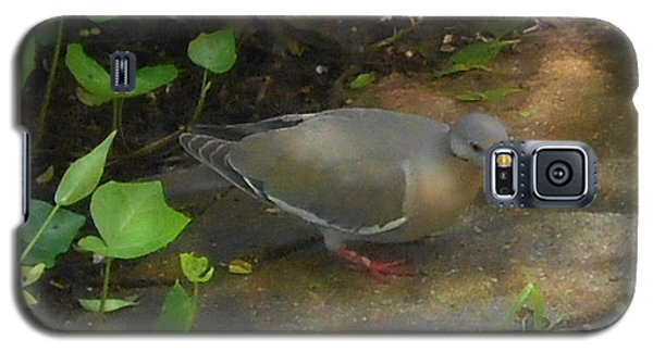Galaxy S5 Case featuring the photograph Pigeon Poster by Felipe Adan Lerma