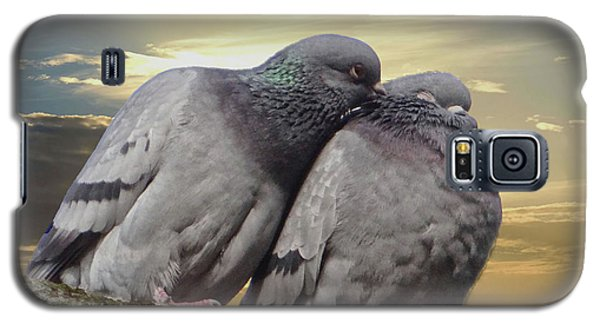 Pigeons In Love, Smooching On A Branch At Sunset Galaxy S5 Case