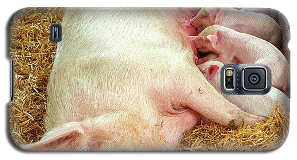 Piglet Feeding Time Galaxy S5 Case