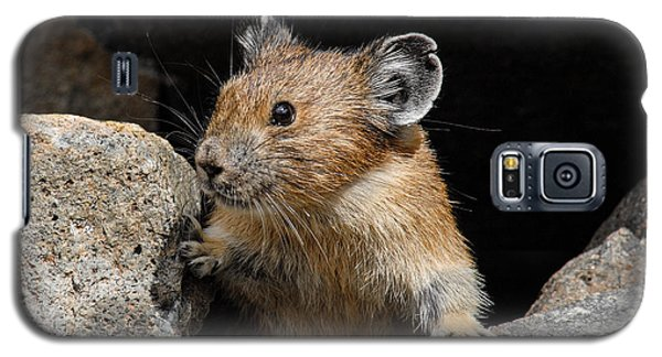 Galaxy S5 Case featuring the photograph Pika Looking Out From Its Burrow by Jeff Goulden