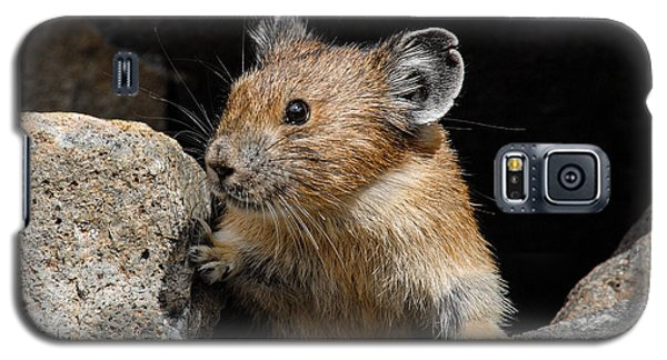 Pika Looking Out From Its Burrow Galaxy S5 Case