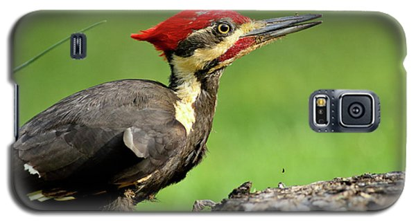 Pileated 2 Galaxy S5 Case by Douglas Stucky