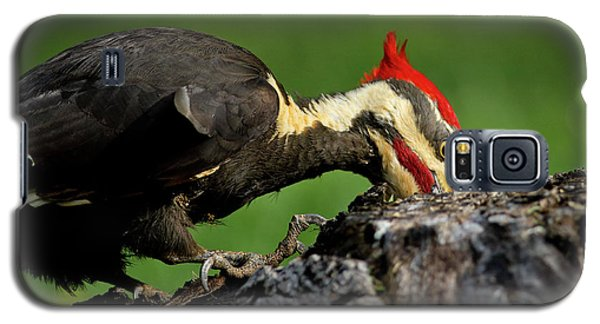 Pileated 3 Galaxy S5 Case by Douglas Stucky