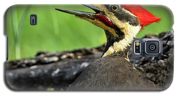 Pileated Galaxy S5 Case by Douglas Stucky