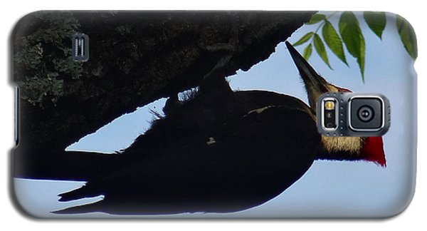 Pileated  Woodpecker Galaxy S5 Case