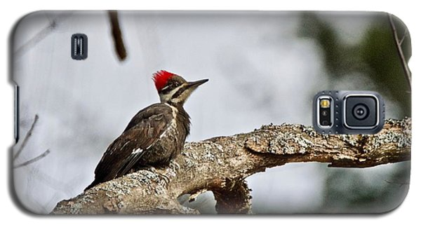 pileated Woodpecker 1068  Galaxy S5 Case by Michael Peychich