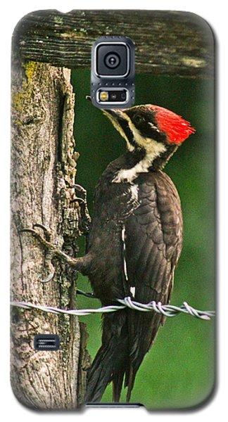 Galaxy S5 Case featuring the photograph Pileated Woodpecker by Jessica Brawley