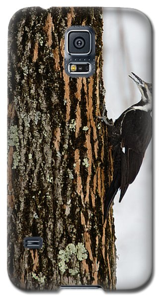 Galaxy S5 Case featuring the photograph Pileated Woodpecker by Skip Tribby
