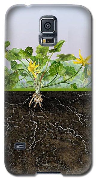 Pilewort Or Lesser Celandine Ranunculus Ficaria - Root System -  Galaxy S5 Case by Urft Valley Art