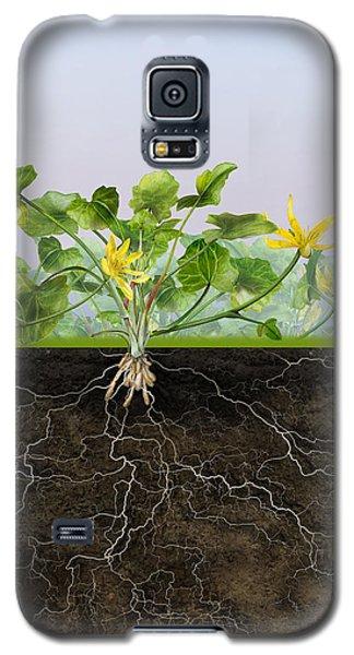 Pilewort Or Lesser Celandine Ranunculus Ficaria - Root System -  Galaxy S5 Case
