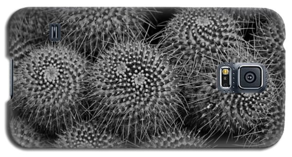 Galaxy S5 Case featuring the photograph Pincushion Cactus In Black And White by Michiale Schneider