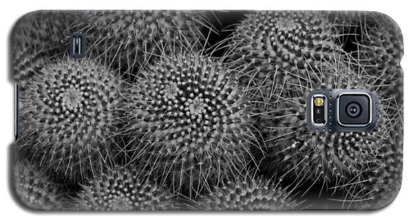 Pincushion Cactus In Black And White Galaxy S5 Case by Michiale Schneider