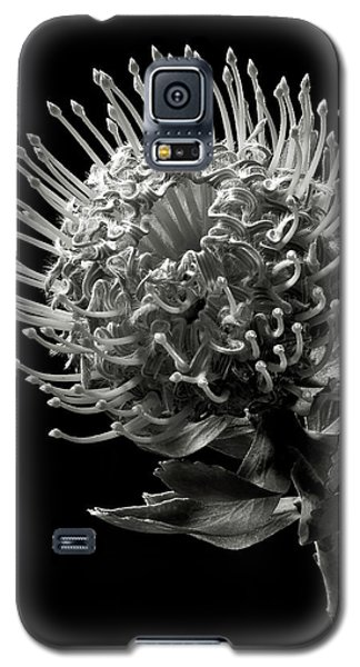 Pincushion Protea In Black And White Galaxy S5 Case