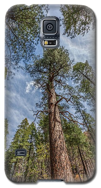Pine Cathedral On The West Fork Galaxy S5 Case