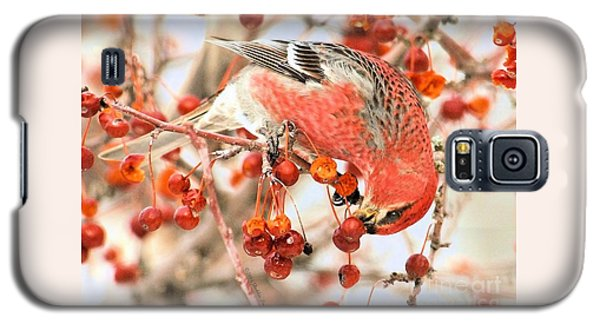 Pine Grosbeak Galaxy S5 Case by Debbie Stahre