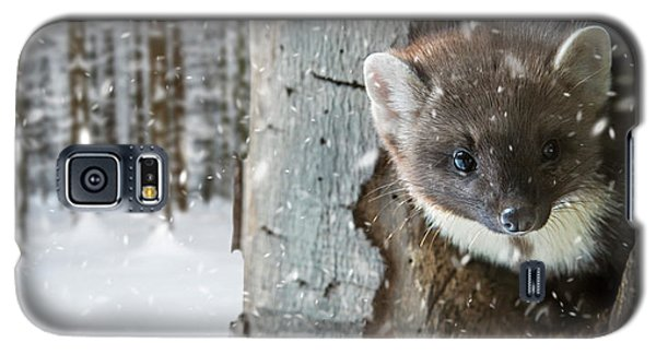 Pine Marten In Tree In Winter Galaxy S5 Case