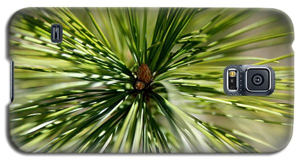 Pine Needles Galaxy S5 Case