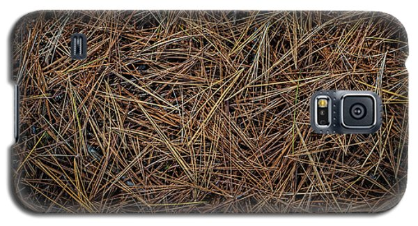 Galaxy S5 Case featuring the photograph Pine Needles On Forest Floor by Elena Elisseeva