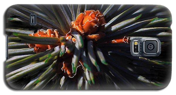 Pine Rose Galaxy S5 Case
