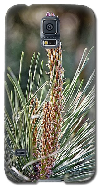 Pine Shoots Galaxy S5 Case